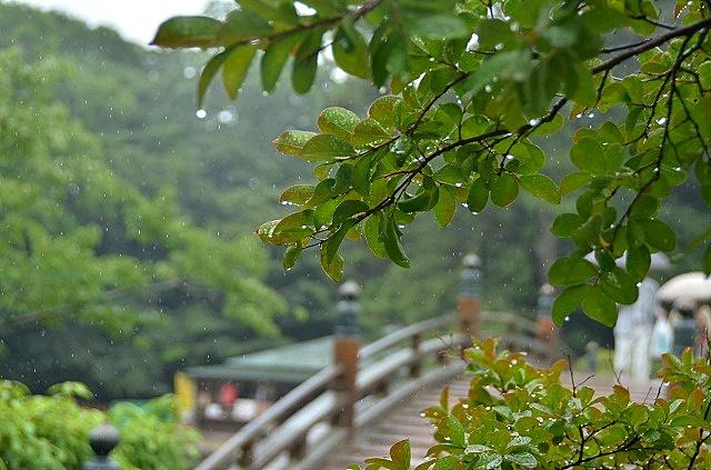 雨の栗林公園