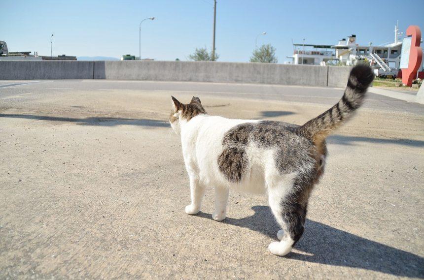 男木島の島猫