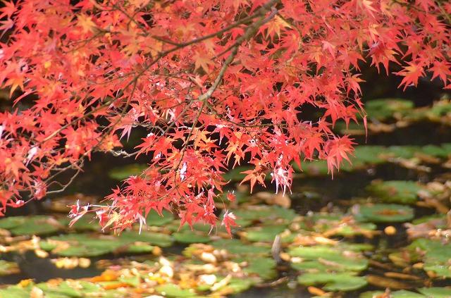 屋島の紅葉と甘~い絶品おしるこ。