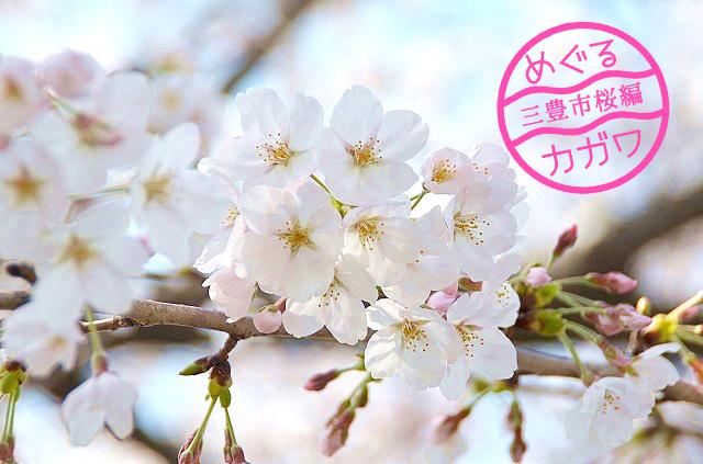 三豊市桜スポット