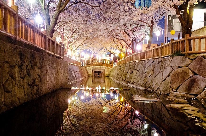 鹿の井出水 桜