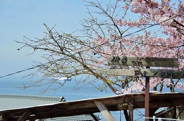 男木島 桜