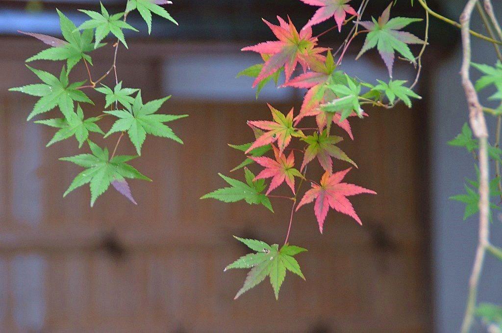 財田の紅葉名所をめぐってみた。香川用水記念公園、宝光寺、釈迦堂