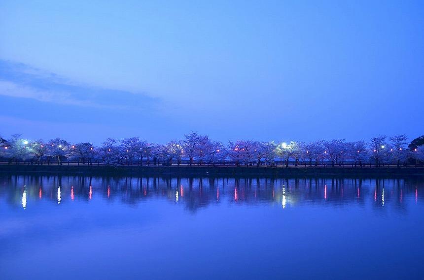 香川県桜名所