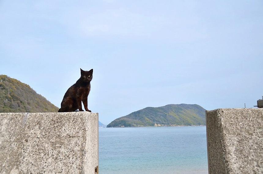 佐柳島 猫