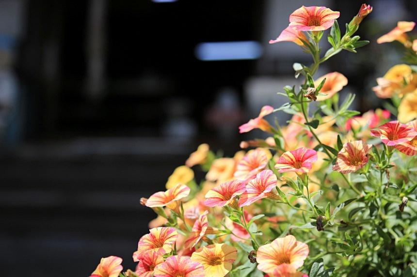 いくつ見つけるかな?海岸寺で山野草の花たちを愛でよう!