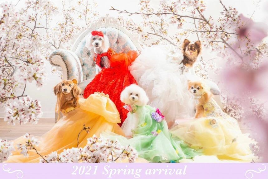 セルフフォトスタジオ・モアナが犬猫用ドレスのレンタルを開始!