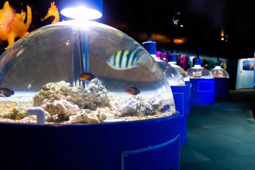新屋島水族館がリニューアル!近未来的?なドーム型水槽がお目見え